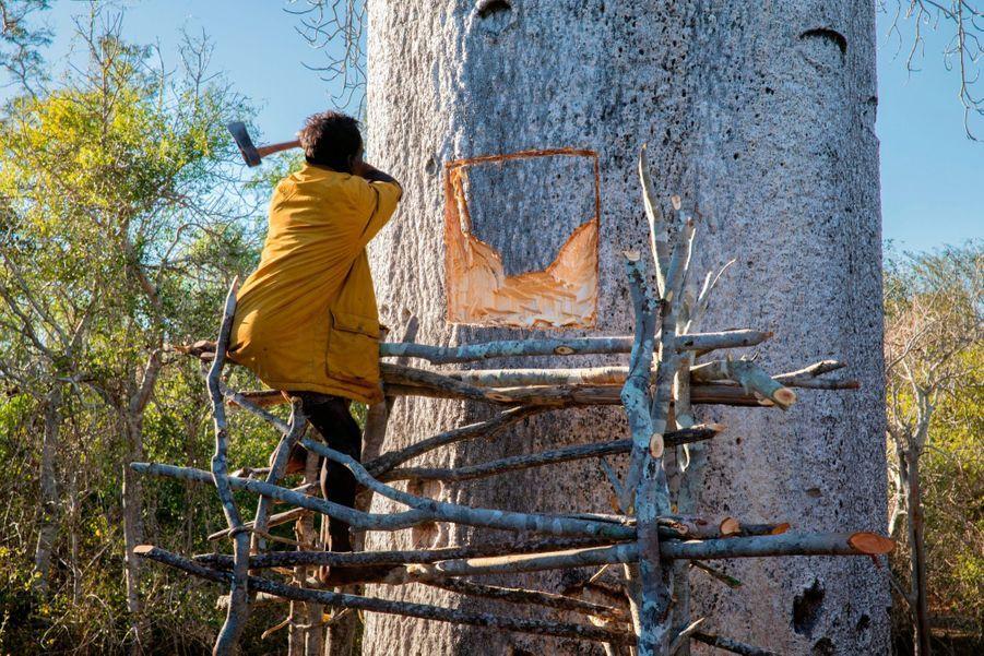 Le travail commence, à l'aide d'un échafaudage de branchages. Pas question de tailler l'ouverture au « rez-de-chaussée ». Le puits doit être à bonne distance des animaux.
