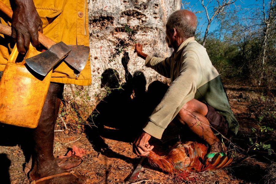 L'heure du sacrifice. Avant d'être un moyen de stockage, le baobab est un lieu de culte où les guérisseurs invoquent les esprits.
