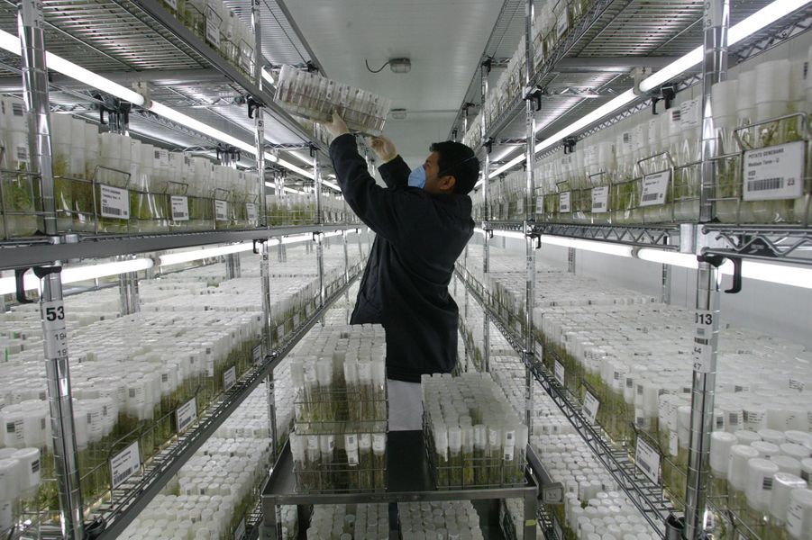 Les graines sont stockées dans des caisses ou des caissons alignés sur des étagères.