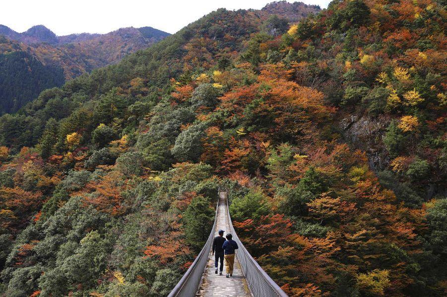 Momigi Suspension Bridge(Japon).