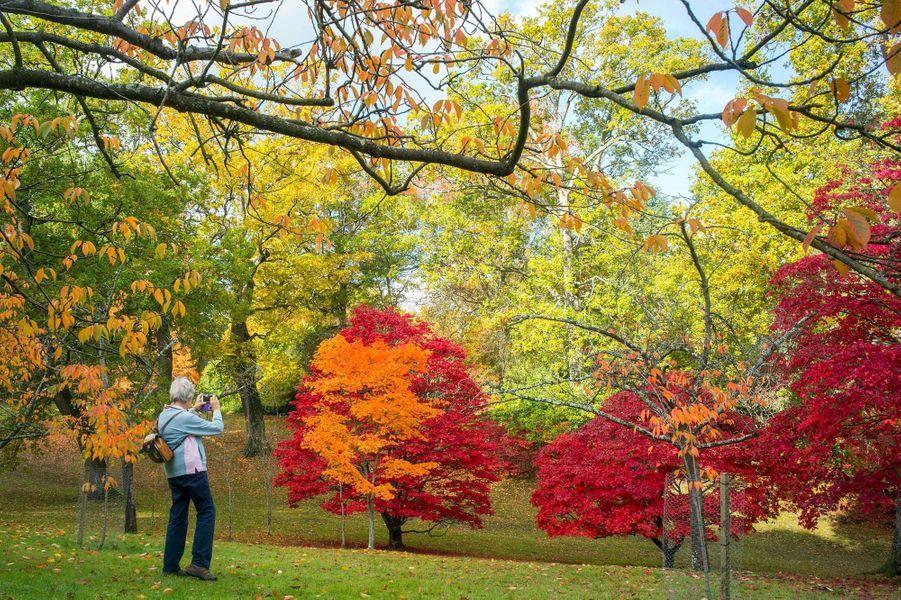 Windsor Great Park,Windsor (Angleterre).