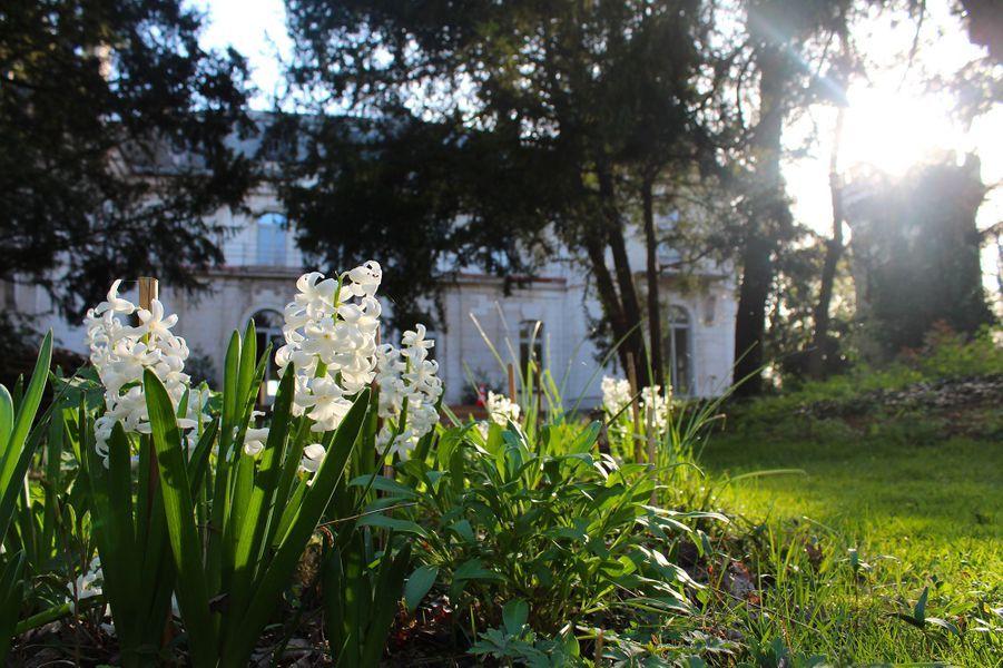 La clairiere et des fleurs