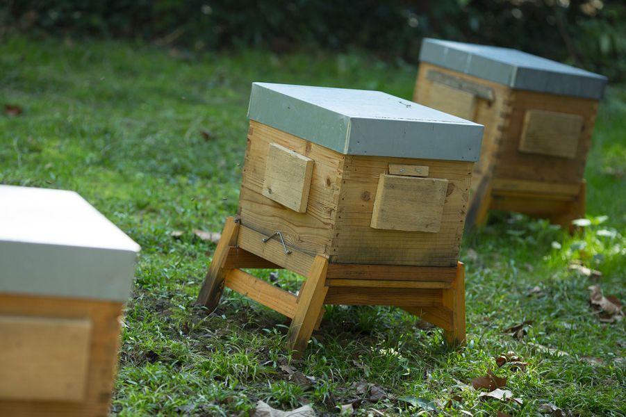 Des ruches pouvant accueillir 80 000 abeilles.