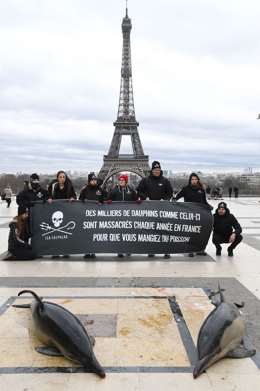 Deux dauphins morts jonchent le parterre du Trocadéro, à Paris, le 14 janvier. L'action a été menée par Sea Shepherd pour pointer du doigt les pics d'échouage de cétacés.