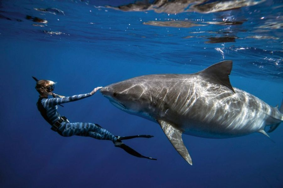 Elle est sans doute le seul être humain à pouvoir affirmer que les grands blancs ont la peau douce. Avec la plongeuse, la terreur des mers devient presque aimable. Elle leur fait face, les caresse.
