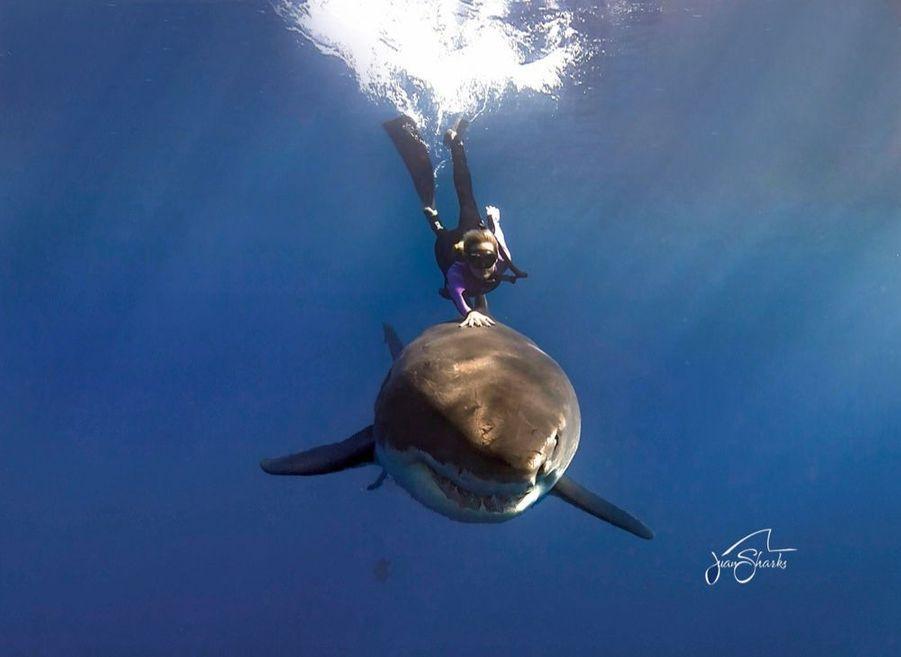 « Les plus beaux moments de ma vie, je les ai passés avec eux », confie Ocean. Elle est la première à avoir organisé des plongées avec des squales, sans protection ni cage. Aujourd'hui, les touristes en rede mandent : ils ne fuient plus les requins, ils les recherchent. Elle les mène par le bout du nez et, jusqu'à présent, aucun ne s'est encore plaint de l'avoir sur le dos.