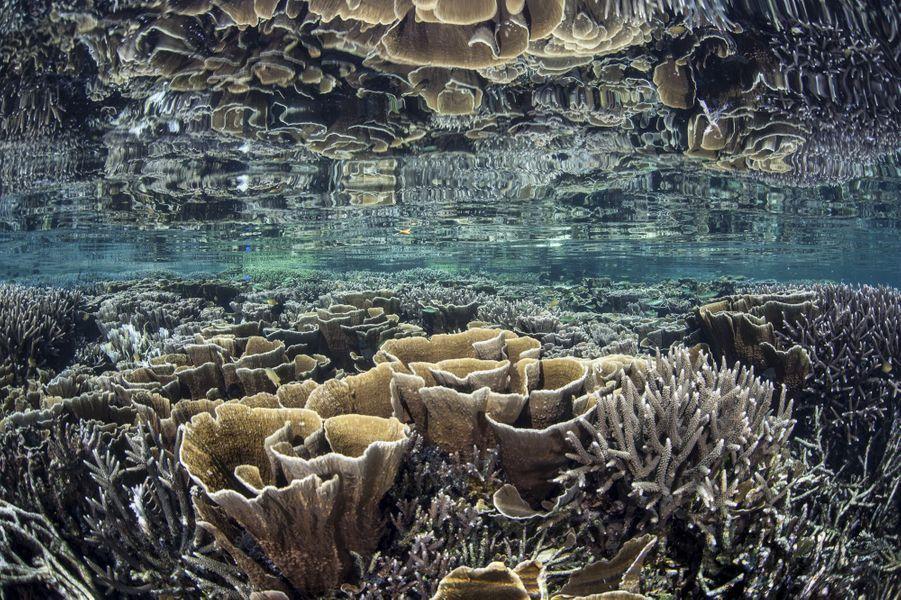 Coraux au large du parc national de Komodo, en Indonésie.