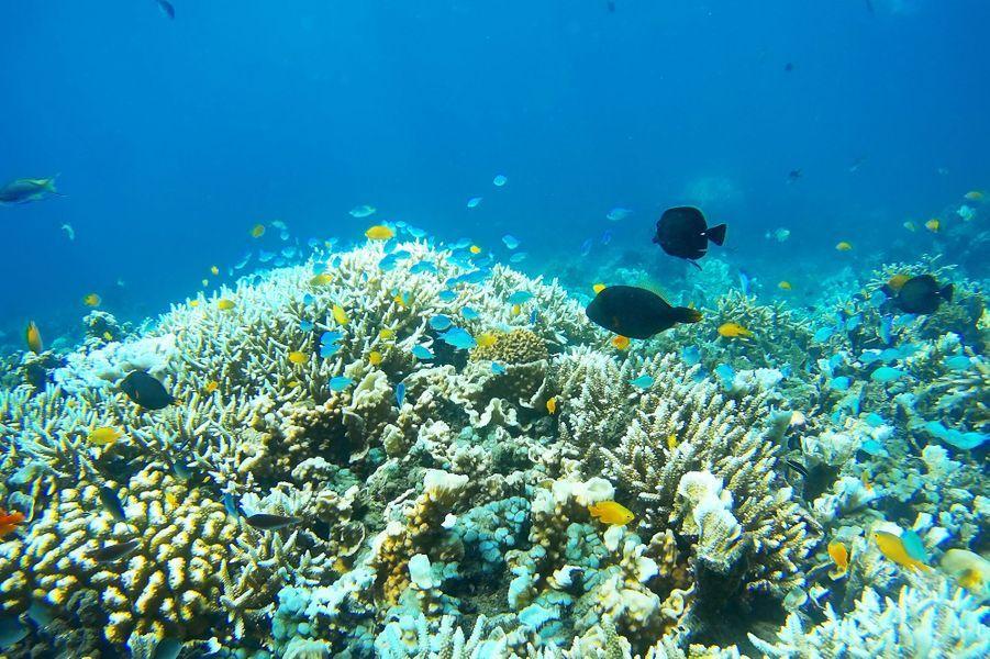 La Grande barrière de corail, au large du Queensland (Australie).