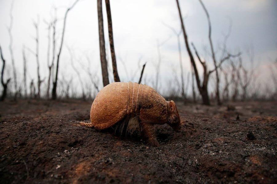 Dans le Parc naturel deOtuquis, plus de 160.000 hectares ont été réduits en cendres, emportant tout un écosystème. Troncs calcinés à perte de vue, terres noircies, et sur le sol des cadavres de mammifères, de reptiles, des coquilles d'escargots géants brulées par les flammes.