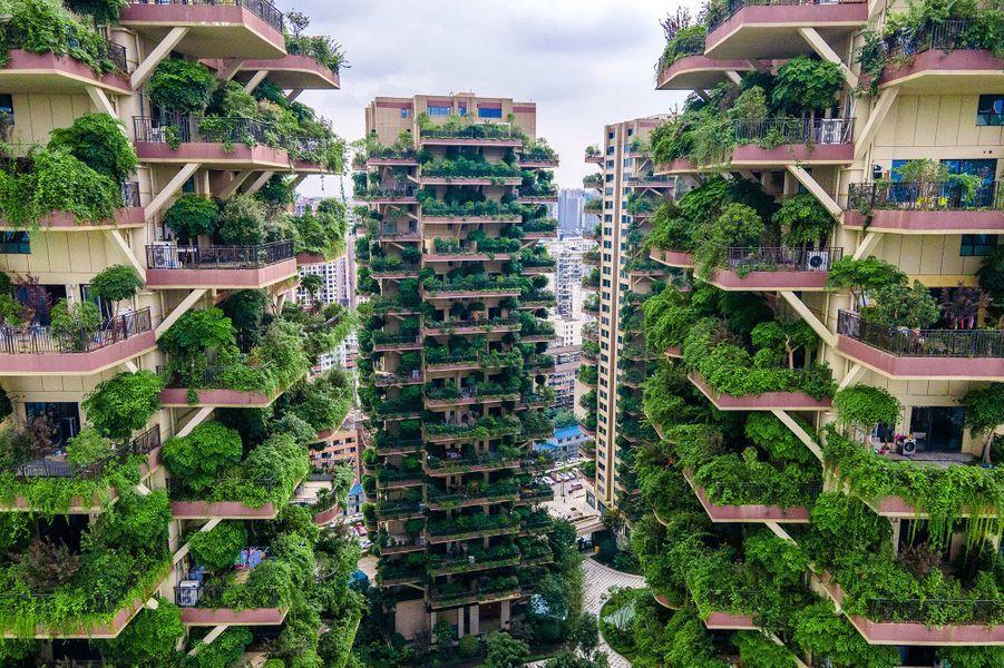 """Des bâtiments résidentiels """"végétalisés"""" du sud-ouest de la Chine, avec plantes luxuriantes sur les balcons des appartements, se retrouvent envahis par leur propre végétation au point d'être fuis par leurs résidents, à Chengdu, en Chine."""