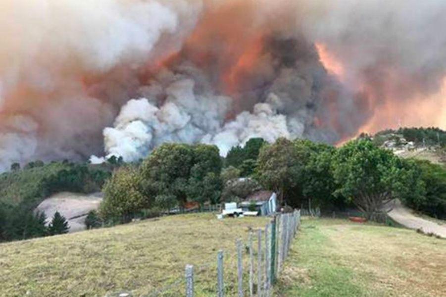 Près de la ville de Knysna, de violents incendies rongent les forêts.