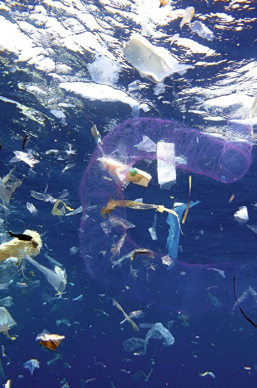 Une longue grappe rose d'œufs de pieuvre flotte dans une constellation de sacs plus ou moins dégradés.