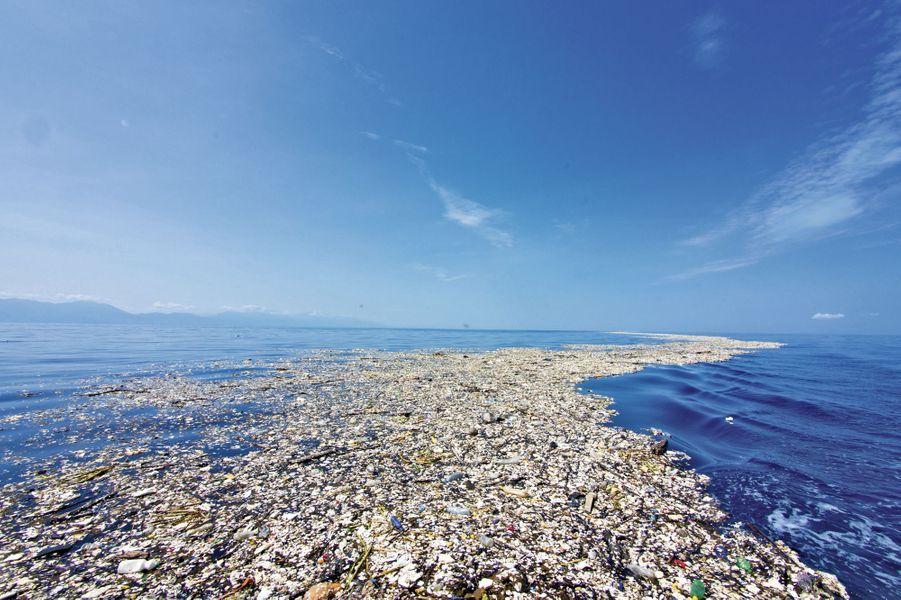Dans le golfe du Honduras : les débris s'agglomèrent le long des sargasses, des algues de haute mer.