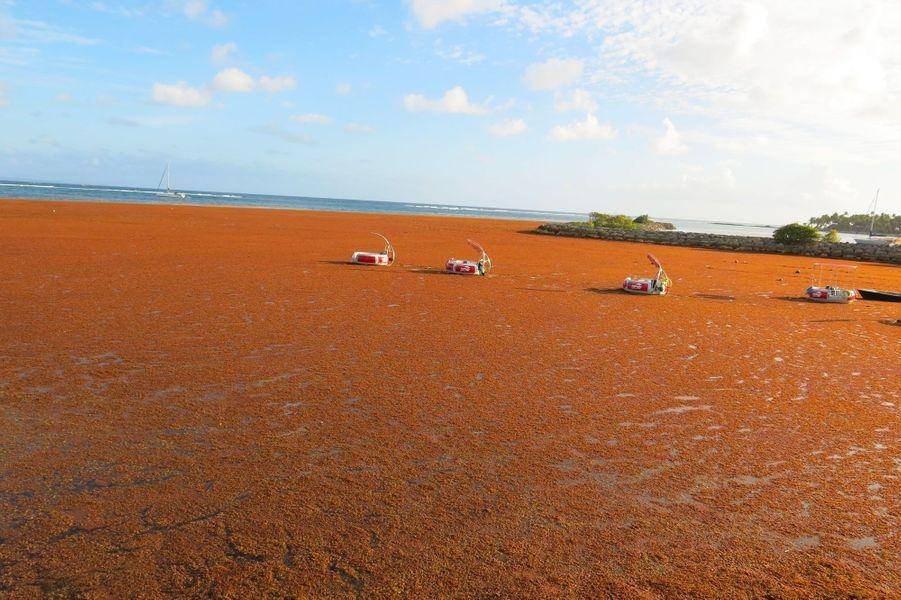 Une plage de Sainte-Anne, en Guadeloupe, en mars dernier.
