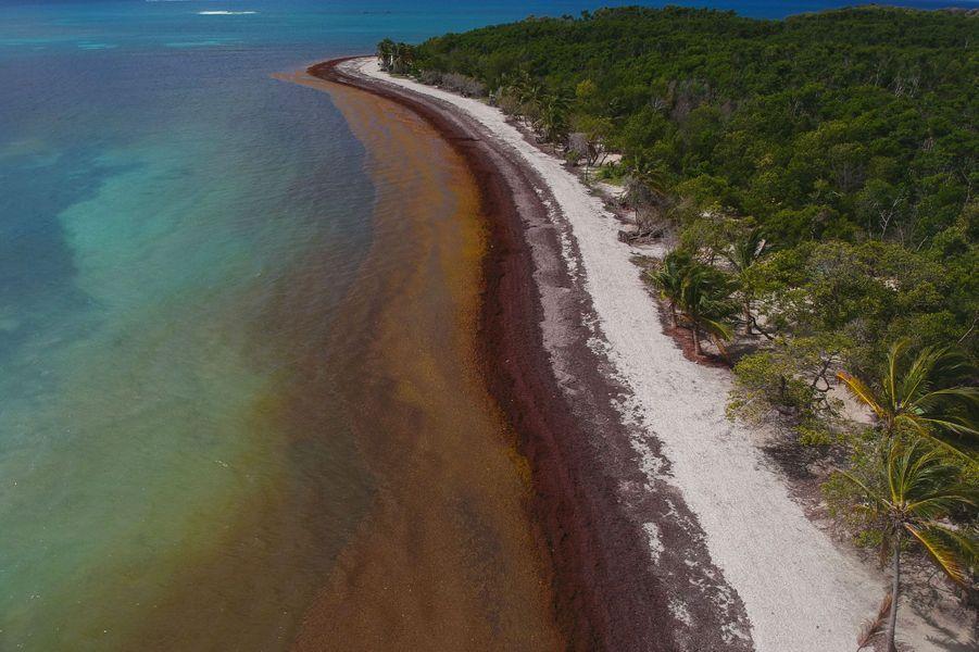 Vue aérienne du Gosier, en Guadeloupe, envahi par les sargasses, fin avril.
