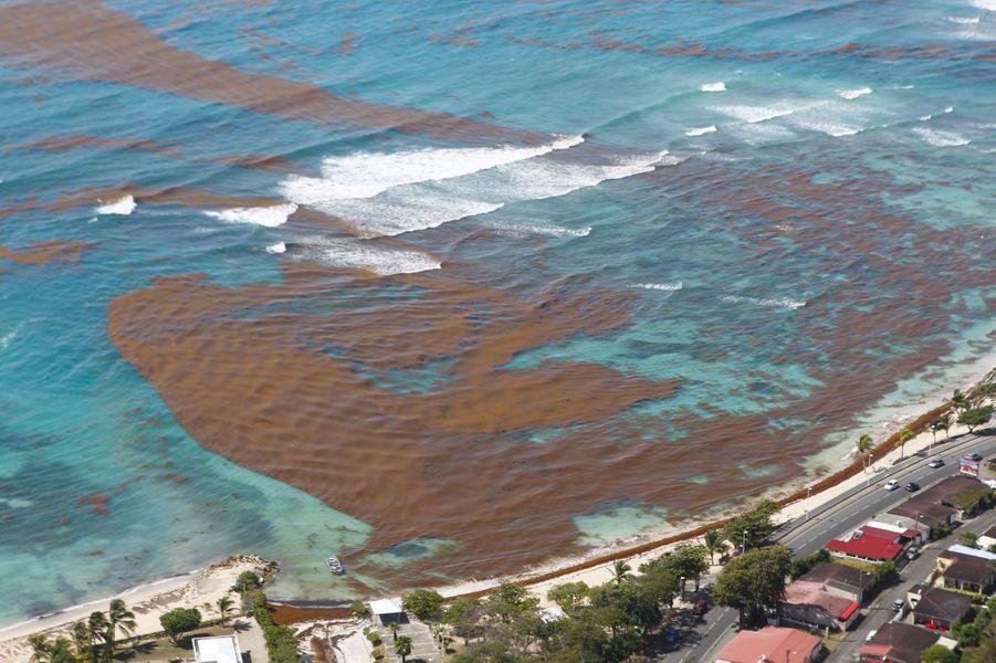 Vue aérienne du littoral guadeloupéen, souillé par les sargasses, en mars dernier.