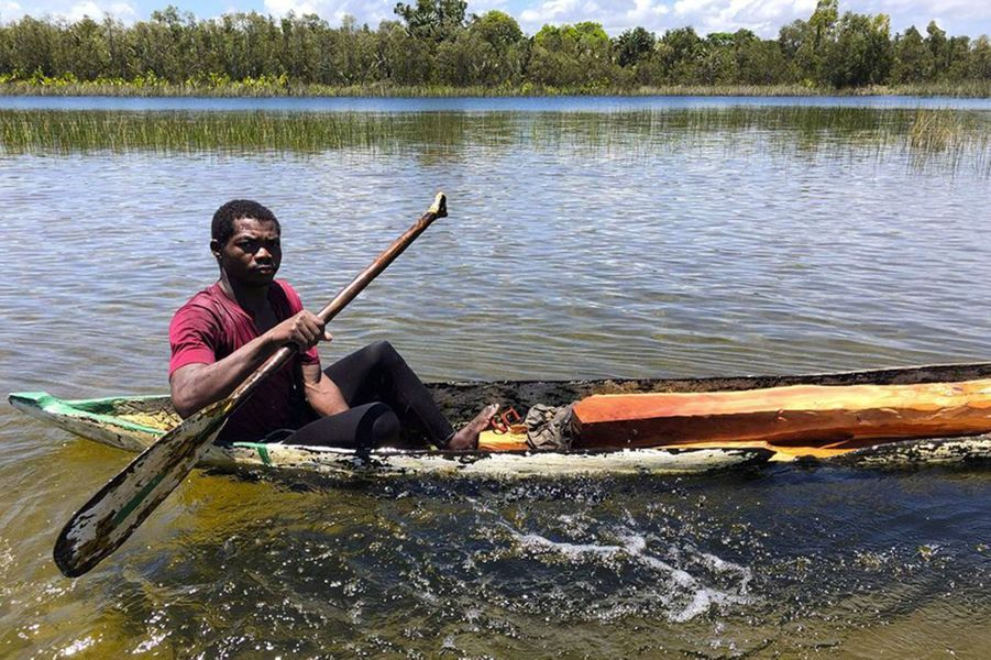 Un homme dans un pirogue transporte du bois fraichement coupé;