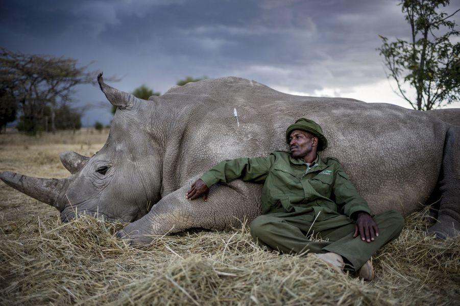 Le soigneur Zacharia Kipkirui avec Najin, femelle de 28 ans, dans la réserve Ol Pejeta Conservancy, au Kenya, le 11 avril.