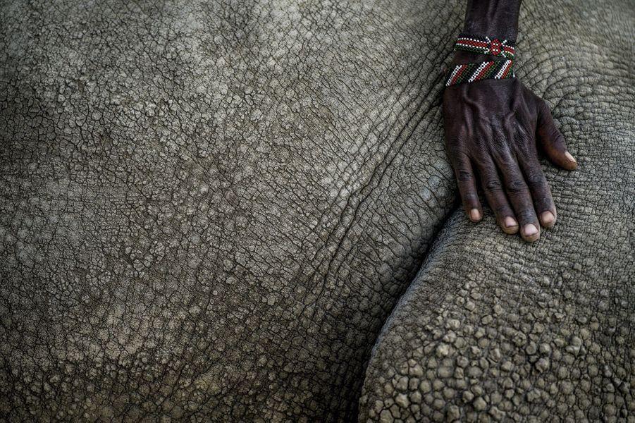 Fatu souffre d'une malformation de l'utérus. Comme sa mère, affaiblie par la captivité, elle ne peut plus porter de bébé.
