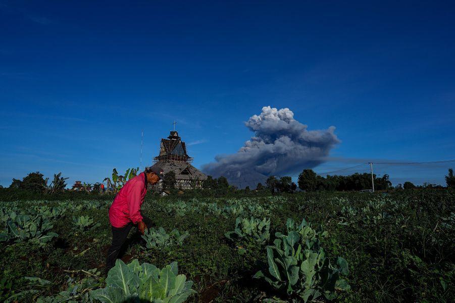 Le Sinabung près des plantations.