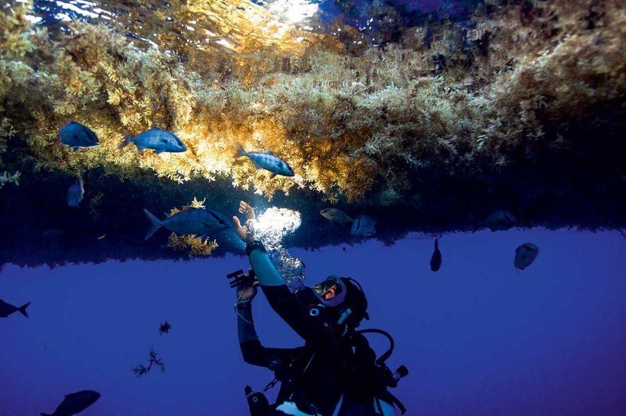 Katia Nicolet, la biologiste et conseillère scientifique, récupère des micro-organismes. Sous le manteau d'algues, c'est la nuit noire.