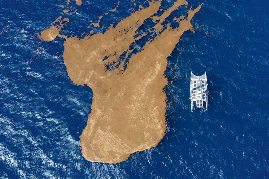 Le navire aux 130 m2 de panneaux solaires longe une nappe de sargasses au large de la Guadeloupe, le 10 juin.