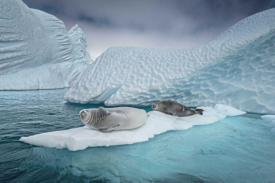Crabeater Seals de Cristina Mittermeier