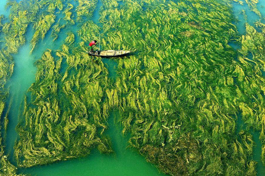 Un pêcheur tente d'avancer sous un champs d'algues vertes.