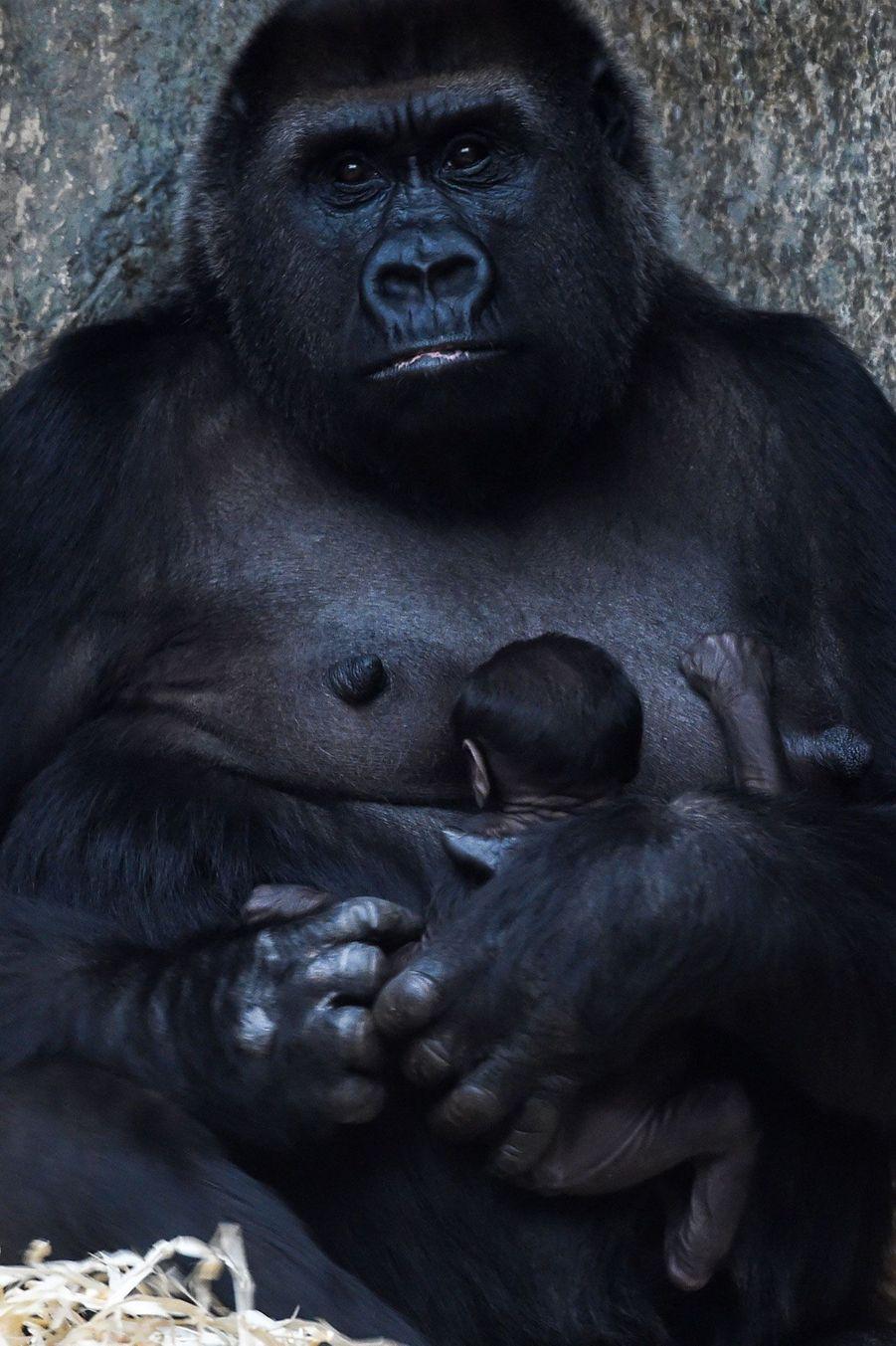 Sheila, la maman, et son petit au zoo de Beauval, le 29 octobre 2018