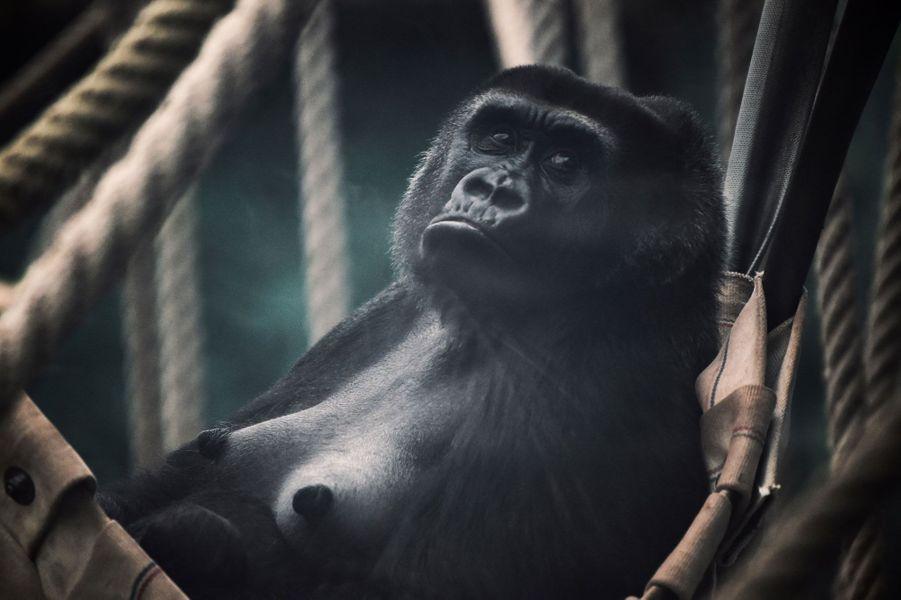 Sheila vient de donner naissance au zoo de Beauval, le 29 octobre 2018