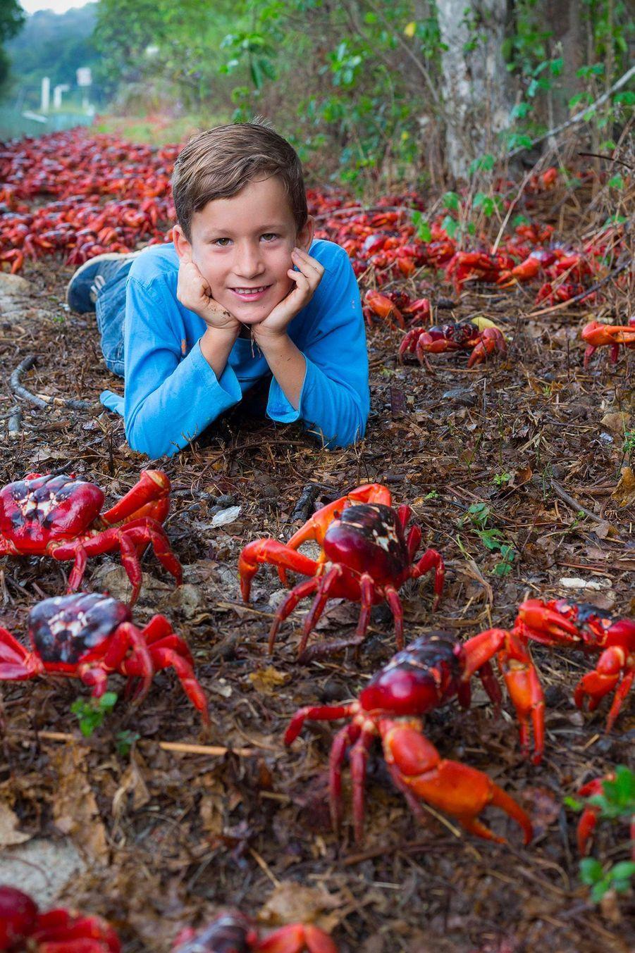 Les crabes rouges (Gecarcoidea natalis) de l'île Christmas en pleine migration.
