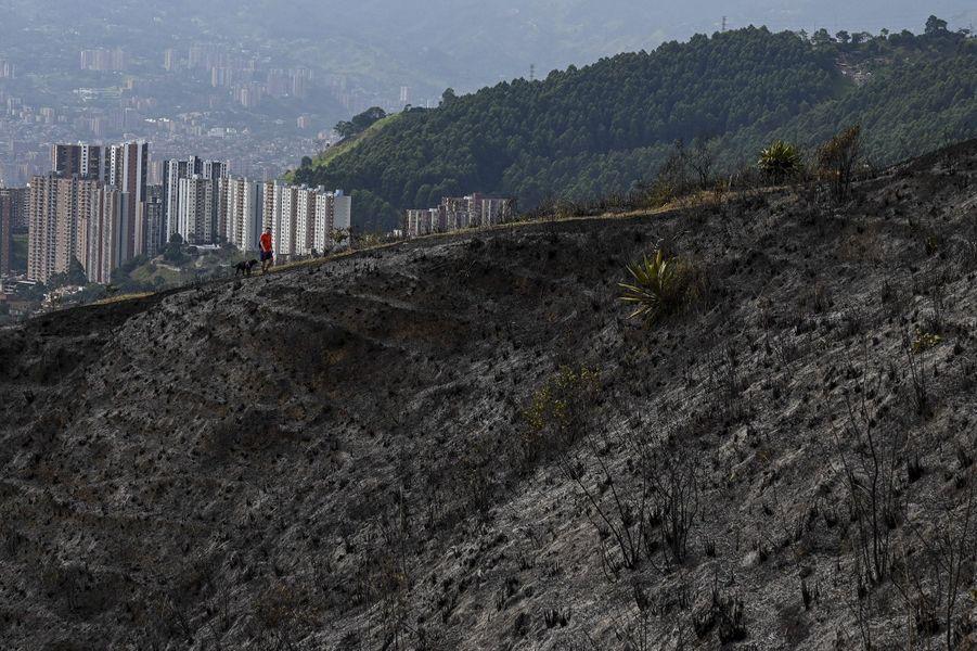 Un homme promène son chien sur les hauteurs de Medellín, qui a failli être touchée par les flammes.