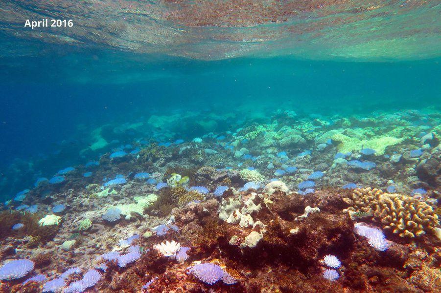 La Grande barrière de corail se meurt encore et toujours