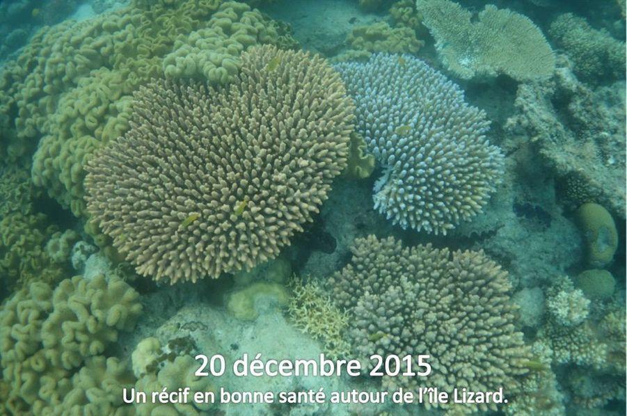 90% du corail autour de l'île Lizard est mort ou en train de mourir selon les observations de Justin Marshall, biologiste à l'université du Queensland