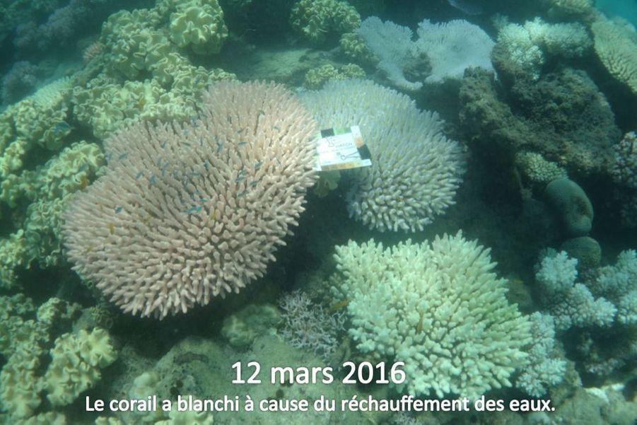 Les poissons autour se nourrissent de plancton et utilisent le corail comme abri