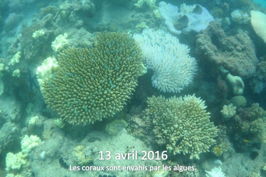 Pour préserver la Grande Barrière de corail, et les milliards de dollars que représente l'industrie du tourisme, l'Australie doit prendre des mesures immédiates en faveur de la lutte contre le changement climatique.