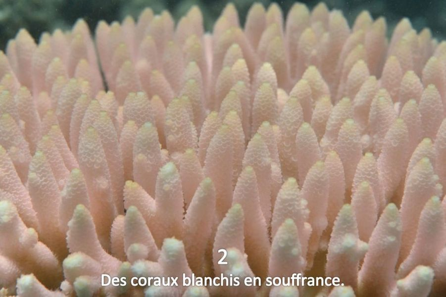 La Grande Barrière de Corail : un désastre raconté en images
