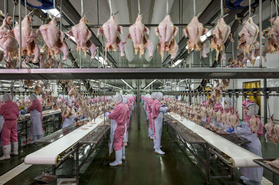 Dix mille poulets à l'heure pour les 1 500 ouvriers de cette usine de transformation de volaille, l'une des plus grande de Chine, située dans le Jiangsu.