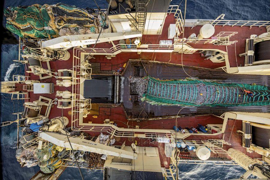 Au large de l'Oregon, Etats-Unis. Soixante-cinq tonnes de harengs du Pacifique déversées sur le pont arrière du plus grand bateau usine américain. Chaque jour, le bâtiment peut transformer 30 tonnes de poissons en filets, bâtonnets, surimi, qui échoueront dans les boîtes de McDonald's, le plus gros client.