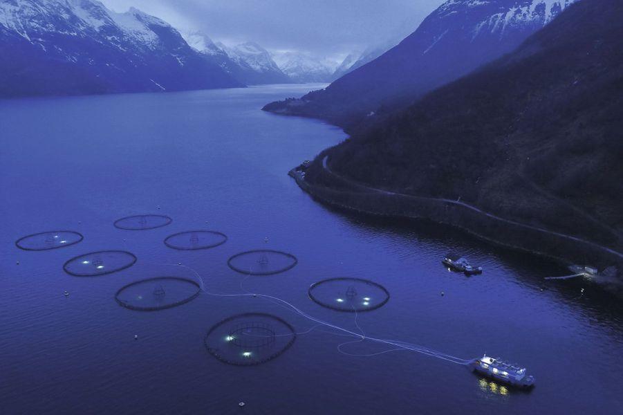 Hjorundfjord, Norvège. Ces jolis ronds dans l'eau forment la plus grande ferme d'élevage de saumons au monde. Deux cent mille spécimens grandissent pendant dix-huit mois dans chacun des huit viviers flottants. Ils sont nourris depuis la barge via des tubes qui pulvérisent dans l'eau un mélange de chair de poisson et de soja.