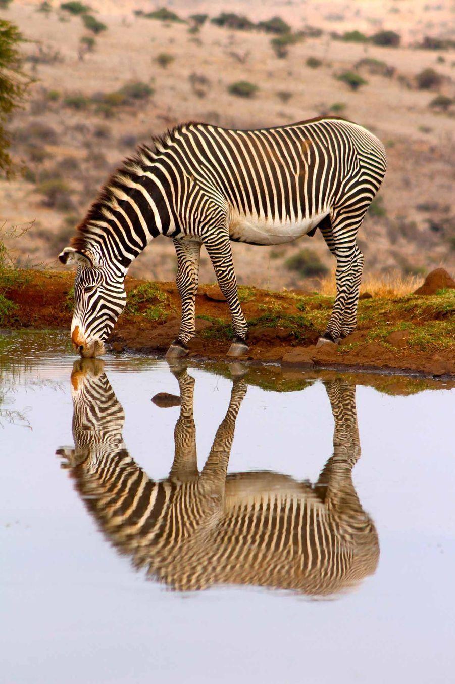 Ce zèbre inspire les plus grands mathématiciens. Photo prise dans la réserve de Lewa, au Kenya.