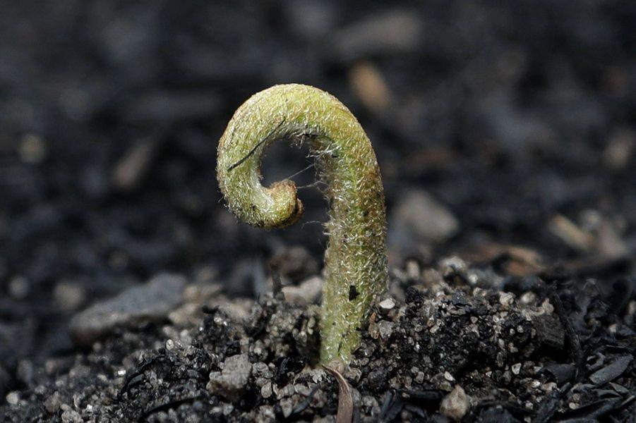 Une plante sort de terre grâce à la pluie.