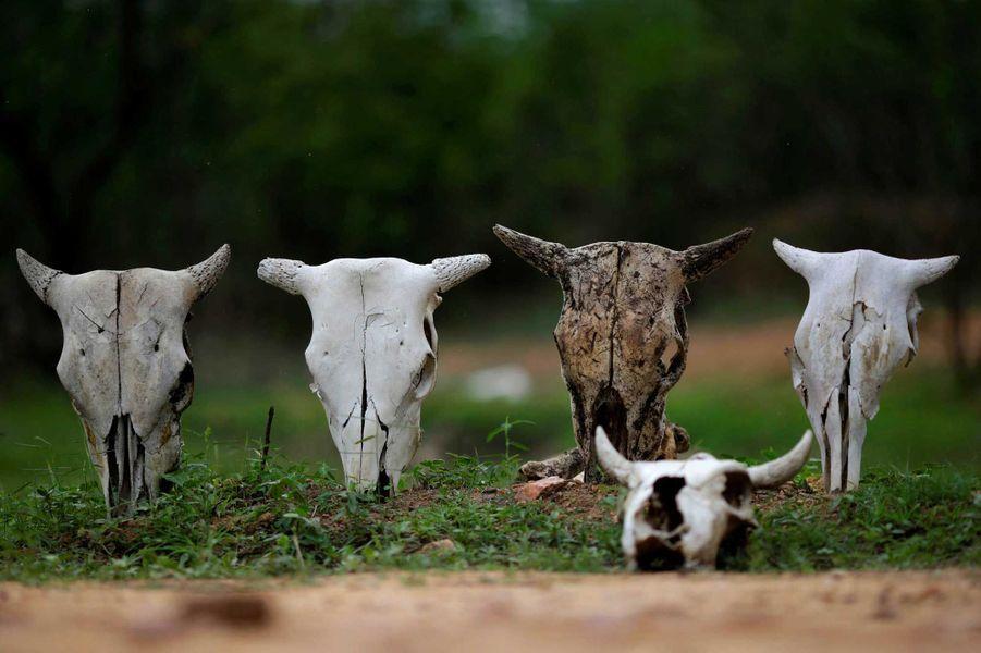 Beaucoup d'animaux n'ont pas survécu à la sécheresse