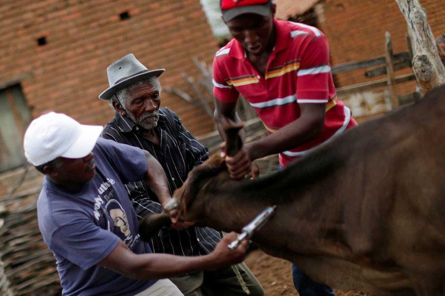 Les éleveurs s'occupent du bétail