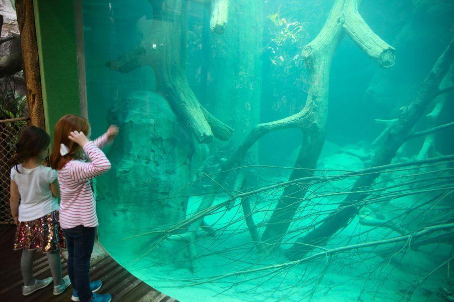 Des enfants contemplent les poissons.