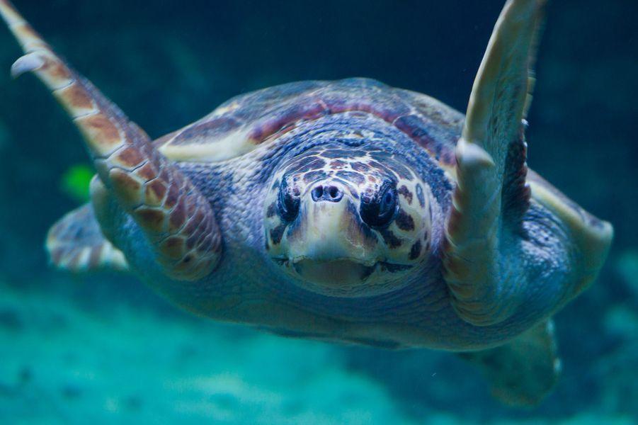 La tortue imbriquée