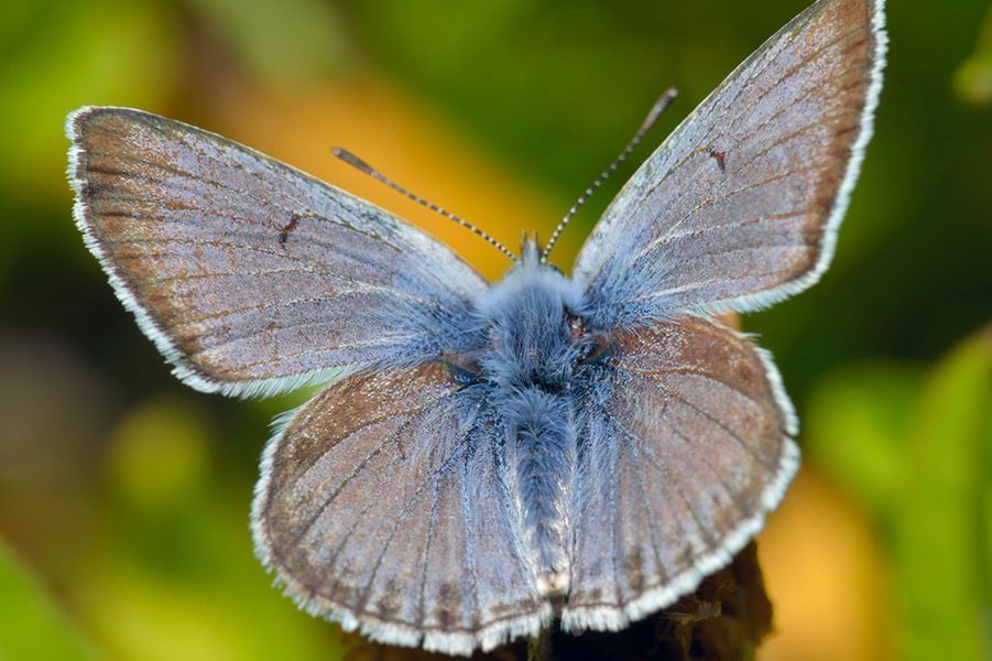 Le Sierra Nevada bleu