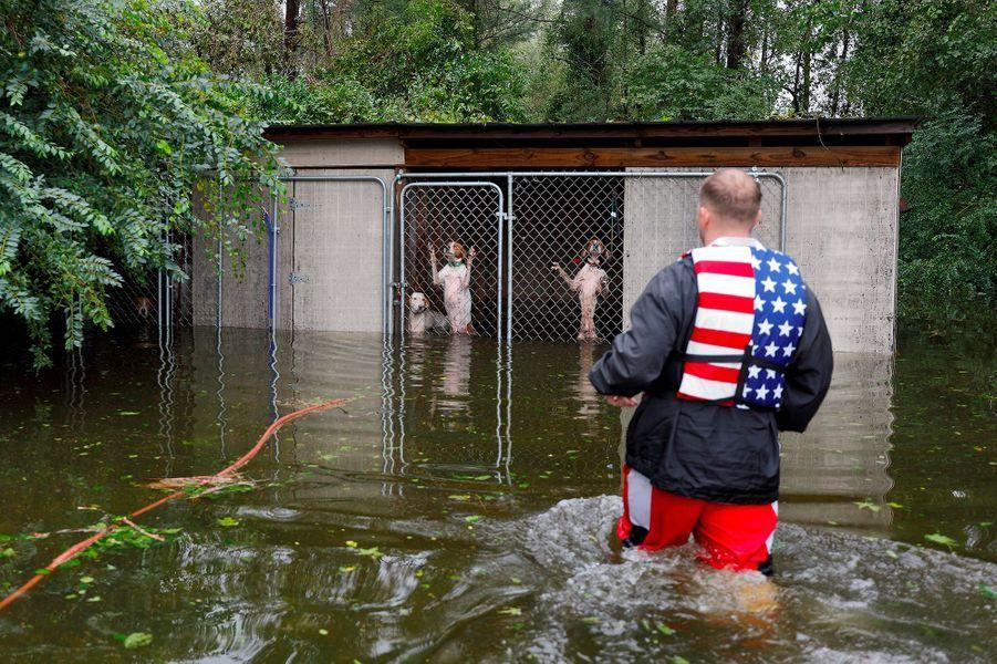 Fin novembre, l'ouragan Florence s'invite en Caroline du Nord. 53 personnes périssent en même temps que plusieurs millions d'animaux d'élevage. L'ensemble des dommages est estimé à plus de 45 milliards de dollars.