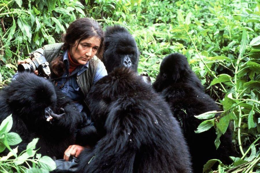 Dian Fossey au Rwanda en 1985. a 53 ans, l'éthologue américaine qui a donné sa vie pour les grands singes est sauvagement assassinée.DeNicolas HulotàJean-Louis Etienne, la défense de la terre a donné un sens à leur vie. Scientifiques, acteurs, explorateurs, chaque jour des hommes et femmes, inconnus ou célèbres, se dressent contre la destruction de l'environnement et de la faune sauvage. Parfois au péril de leur vie comme Chico Mendes, le protecteur de la forêt amazonienne et des Indiens qui l'habitent, abattu en 1988 sur les ordres d'un riche éleveur. Ou l'éthologue Dian Fossey, assassinée à l'âge de 53 ans au terme d'une vie entière dédiée auxgorillesmenacés d'extinction.L'exemple de ces pionniers est une source d'inspiration pour des milliers de jeunes dans le monde, à l'instar de Boyan Slat, Néerlandais de 21 ans, qui s'est donné pour mission de nettoyer les océans. Ces héros de l'écologie ont aussi un rôle capital auprès des gouvernements et des puissantes multinationales, trop souvent enclins à faire passer leurs intérêts économiques et politiques avant l'urgence environnementale : par leur capacité de mobilisation, ils sont capables de pousser à agir ceux qui sont vraiment en position de faire avancer les choses. Si la conférence sur le changement climatique, COP 21,qui se tiendra du 30 novembre au 11 décembre à Paris, débouche sur un accord important, ils y seront pour beaucoup.A lire aussi:Paul Watson, preux chevalier du grand large