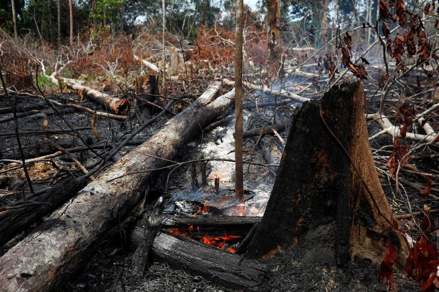 De nombreux incendies ravagent la forêt amazonienne au Brésil.